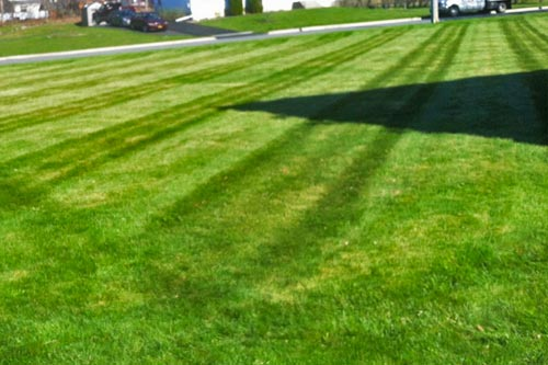 Side yard in New Paltz, NY mowed with stripes.